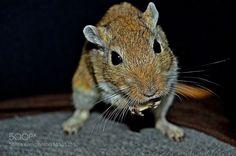 Animal by xurxomarquezvarela #animals #animal #pet #pets #animales #animallovers #photooftheday #amazing #picoftheday