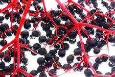 Zdravé černé bezinky