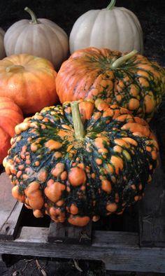 Superfreaky pumpkin