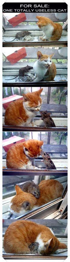 Kedi ve fare