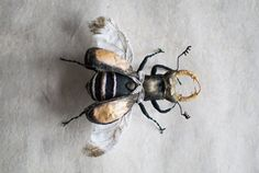 black-gold beetle textil art insect Soft von mysouldesign auf Etsy