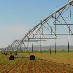 El riego mecanizado mediante sistema Pivot para producir maíz es altamente rentable, en cultivo de maíz para semilla se recupera la inversión en menos de tres años.