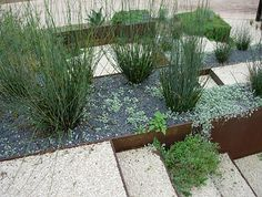 Layers of xeriscaping in a modern yard. USE on West side of house