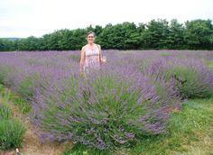 'Phenomenal' Lavender: It's disease-resistant, tolerates heat and humidity, and is also deer-proof.