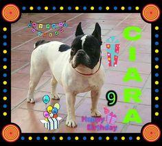 Hoy 04/01/18 Cumpleaños la pequeña Ciara le deseamos muchos mimos y chuches 🎁🎉🎂🎈🥓🍗🐕💞😘😘 #Cumpleañeros #Peludos #Mascotas #Perros #Dog #Felicidades #felizcumpleaños #hapibirday