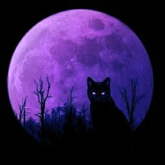 Black cat and a purple moon . Halloween Artwork, Halloween Cat, Blood Wallpaper, Painted Rocks Kids, Purple Cat, Rock Painting Designs, Chalk Art, Beautiful Cats, Stone Painting