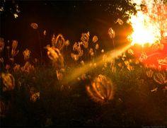 Lighting and Photography.