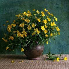 Bu çiçekler muhteşem.