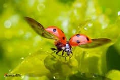 I enjoy a good insect photo or other macro shot...