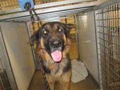 ★12/28/14 SL★• BRUNO - ID#A1594807 My name is BRUNO. I am a neutered male, black and tan German Shepherd Dog. The shelter staff think I am about 2 years and 2 months old. I have been at the shelter since Nov 23, 2014. This information was refreshed 3 days ago and may not represent all of the animals at the San Diego County Department of Animal Services - Bonita.