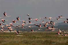 Costa Vicentina - Conheça mais sobre o Alentejo em: www.asenhoradomonte.com