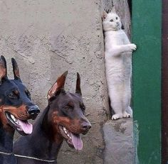 """""""You will never find me!""""😂 Cute Puppies - CHECK OUT 👉 Gif pictures o. - animals and pets - Hunde bilder Funny Animal Pictures, Cute Funny Animals, Funny Dogs, Cute Cats, Gif Pictures, Funny Humor, Funny Quotes, Hilarious Pictures, Cute Puppy Pictures"""