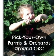 Today #ontheblog, Maria shares her list of pick-your-own farms & orchards. Head on over and dream of drier weather... ☔️