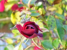 One Mother Hen: Rose gone wild Rose, Garden, Flowers, Plants, Pink, Garten, Lawn And Garden, Gardens, Plant