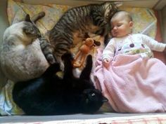 cat nap with baby in crib