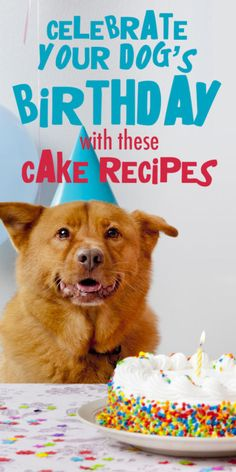 Why not make your dog's birthday extra-special with one of these homemade doggie birthday cakes that your pooch will be begging for?