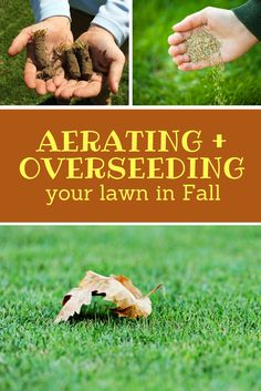 To maximize the benefits both services have to offer at once, combining a core aeration with overseeding is the way to go. Overseeding a lawn after it has been aerated allows an open channel for seed to penetrate the soil and ensure optimal seed-to-soil contact. Click to learn more.
