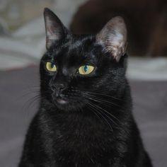CLOE - Gato adoptado - AsoKa el Grande
