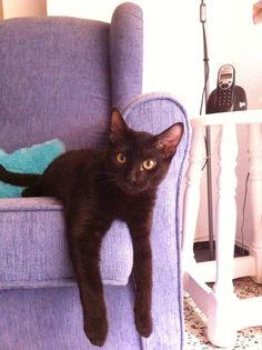 Teri #cat #kitty #gato #gatito #mascota