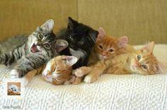 Cute sweet kittens