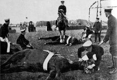 Trakehner horses were trained to the extreme! The breed has competed in every Olympic Games except 1932.