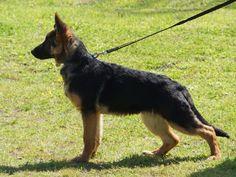 Köpek Eğitim Çiftliği