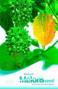 Solution Seeds Farm Rare Momordica Charantia Balsam Pear Herb Vegetable Seeds, Original Pack, 12 Seeds, Bitter Melon