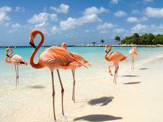Renaissance Island, Aruba - Hidden lagoons, staggering mountains, European-inspired architecture, and more.