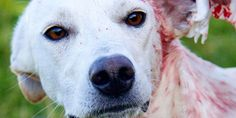 Demand justice for a dog that was shot and tied to railway tracks because it would not fight