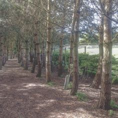 Nice woods at the forbidden corner Forbidden Corner, Woods, Nice, Places, Woodland Forest, Forests, Nice France, Lugares, Wood