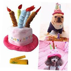 Happy Birthday Cats And Dogs