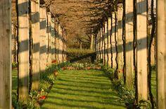 Perspective dans le parc de Bercy.jpg