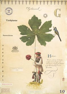 Goldenseal with Indian – m f cardamone