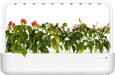 Click and Grow Smart Garden - White Smart Garden, Gardening, Herbs, Plants, Lawn And Garden, Herb, Plant, Planets, Horticulture