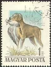 Vizsla stamp from Hungary