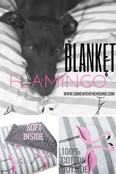 Trendy pet bedding with a pink flamingos print. Soft minky inside, hight quality eco cotton outside. Flamingo Print, Pink Flamingos, Cardigan Welsh Corgi, Dog Blanket, Fluffy Dogs, Italian Greyhound, Australian Cattle Dog, Pet Beds