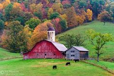 The Farm with all its gorgeous changing of the leaves.