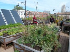 roof farm pinned by @dakwaarde