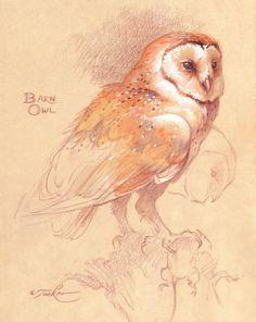 'Barn Owl Mouse Study' by Ezra Tucker Owl Bird, Bird Art, Pet Birds, Pencil Drawings Of Animals, Art Drawings, Owl Pictures, Illustration Art, Illustrations, Wise Owl