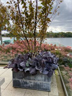 Dirt Simple | Gardening and Landscape Blog by Deborah Silver Outdoor Christmas Planters, Outdoor Pots, Container Plants, Container Gardening, Fall Containers, Soil Layers, Large Pots, Garden Boxes