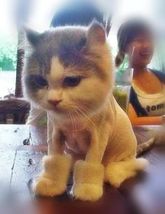 Kitty Uggs! I hate cats but this is too funny!