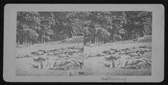 The harvest of death. [Stereograph]