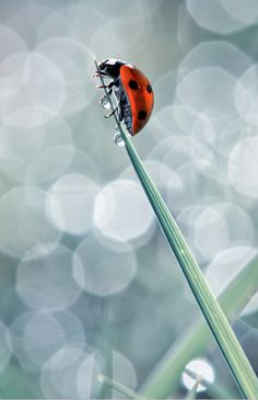 Photographer: Bloas Meven  wow! drops AND a ladybug with wonderful bohkeh!
