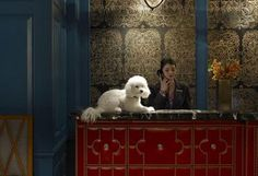 Top 5 Pet Friendly Hotel Chains Petmd