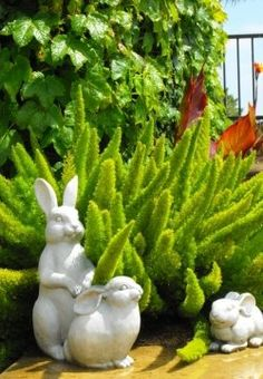 foxtail ferns and rabbits~ love this look!  I'm think I could overwinter the foxtail indoors...