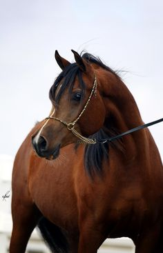 LL STARSONG, 2007 bay mare by Pimlico RCA x. Balyanna by Thee Desperado