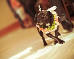 This little guy was officially part of the wedding party. Read more about Erika & Jason's wedding on the blog!