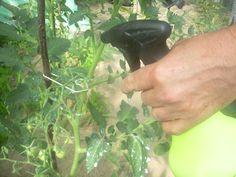 oprysk pomidorów mlekiem Garden Trellis, Diy And Crafts, Flora, Vegetables, Plants, Gardening, Grill, Sad, Fitness
