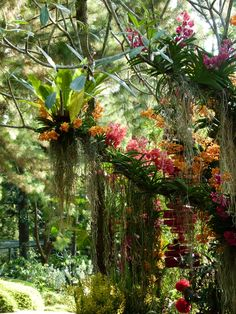 Orchid Botanical Garden, Singapore....These orchids grow naturally as epiphytes on trees! It is natural, but inspires me for floral design.