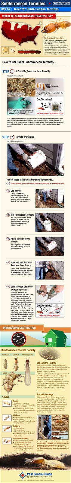Subterranean Termite Treatment - How to Get Rid of Subterranean Termites